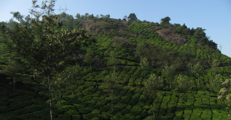 Teeplantagen in Munnar, Kerala